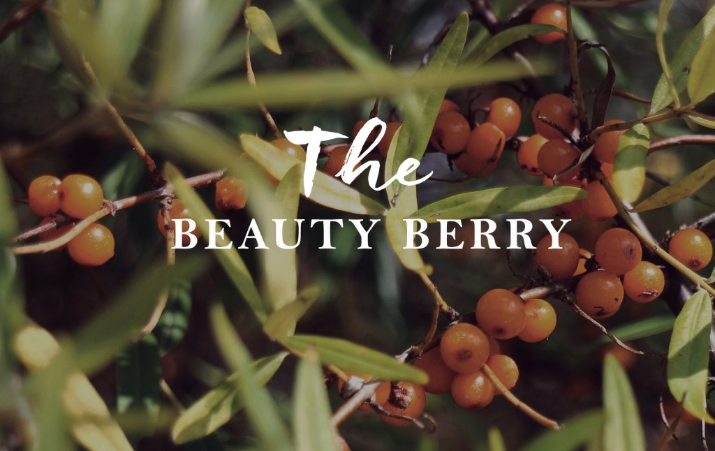 beauty_berry